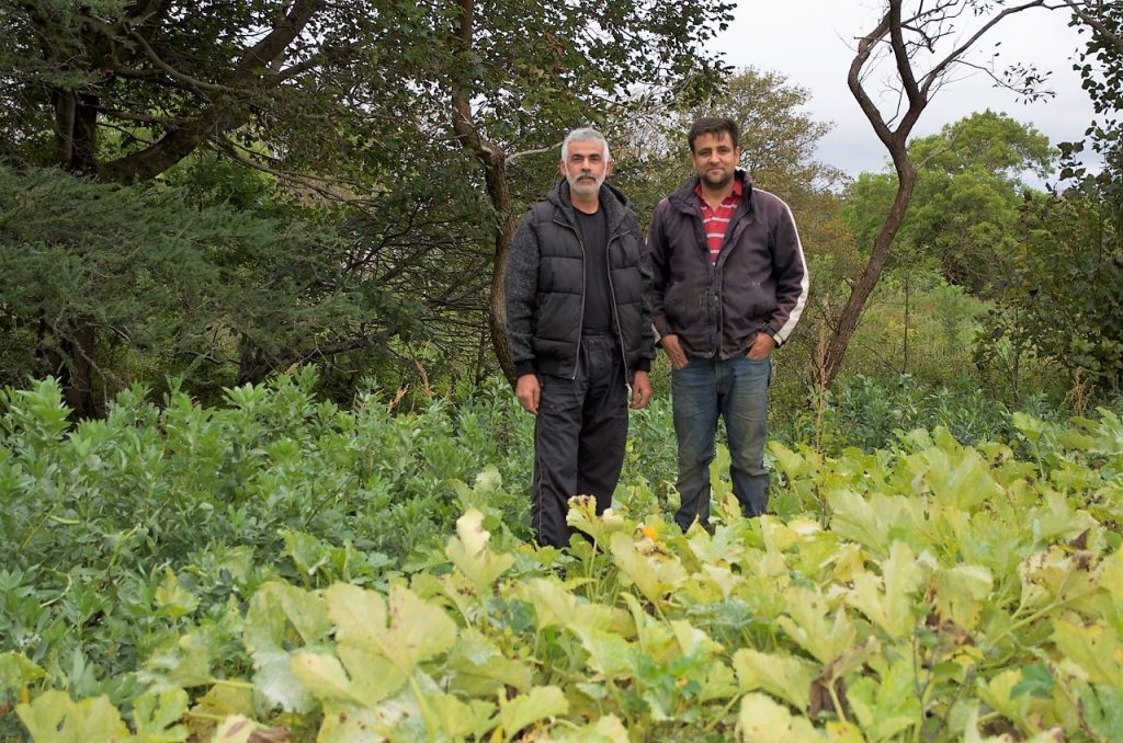 Two men standing in a farm field of vegetables.